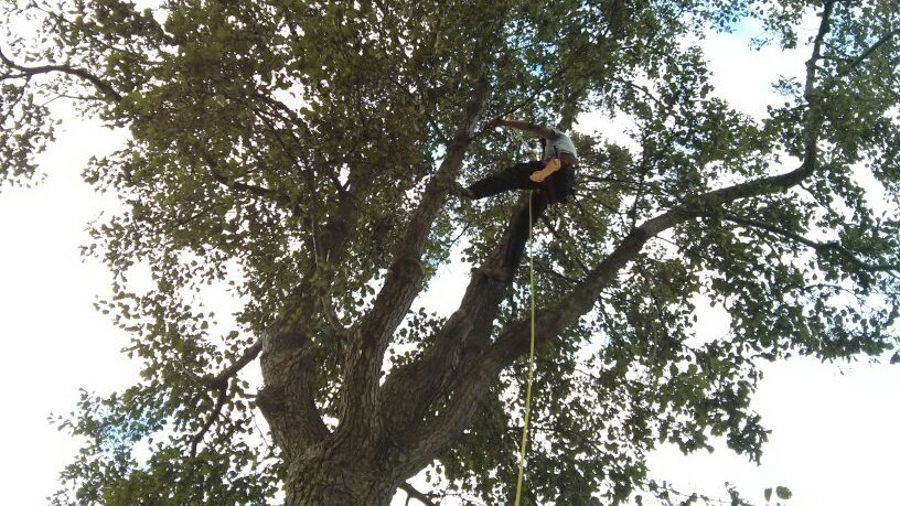 hoge boom snoeien
