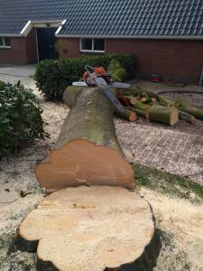 boom kappen Groningen