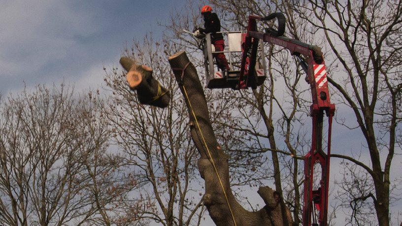 hoge boom kappen