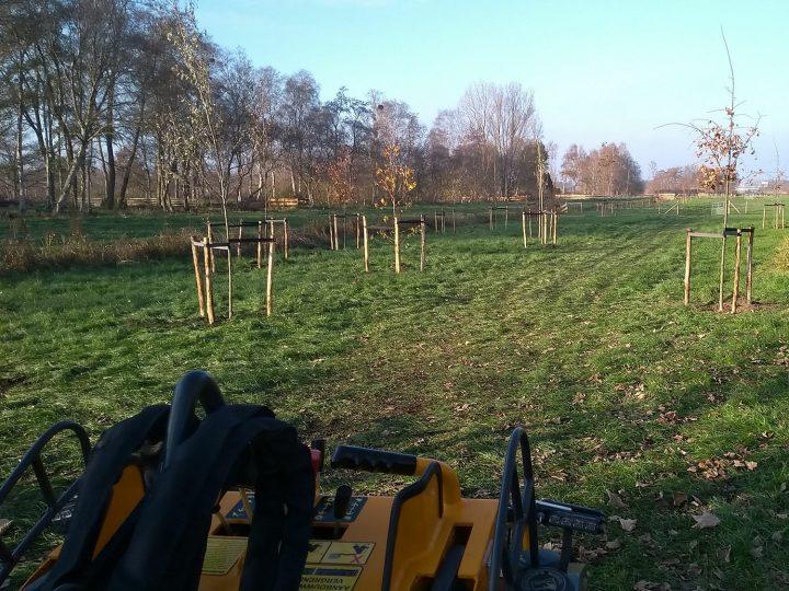 Bomen geplant in Haren